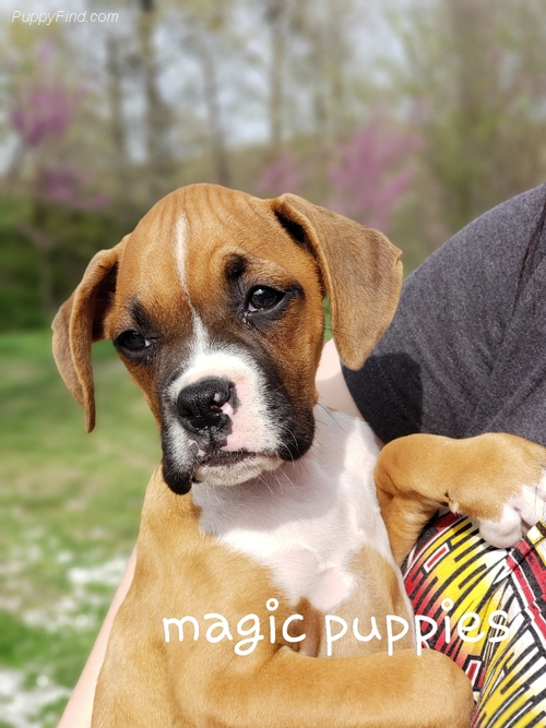 ABOUT MAGIC PUPPIES
